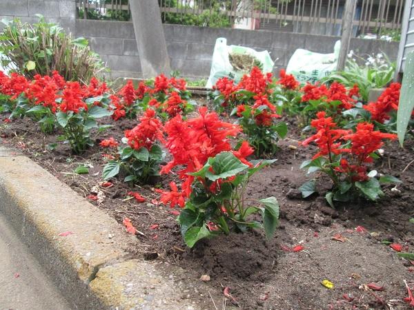 春・秋の植栽2